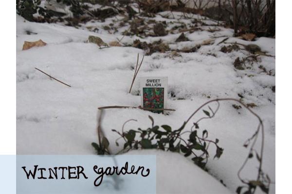 wintergarden3