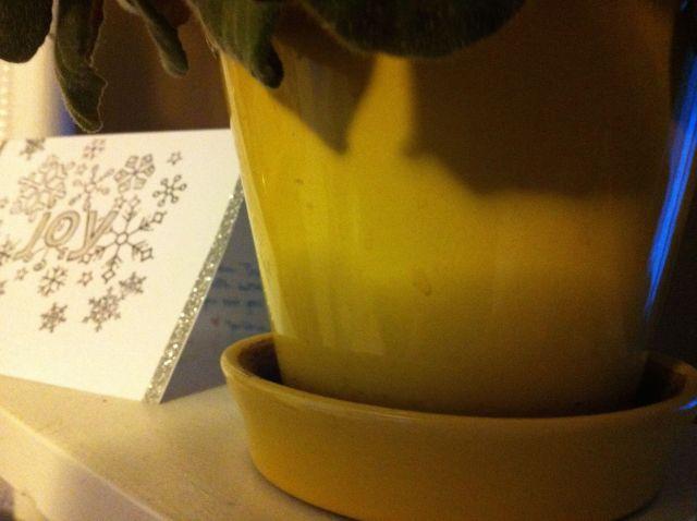 capebretoncolourweek-yellow17