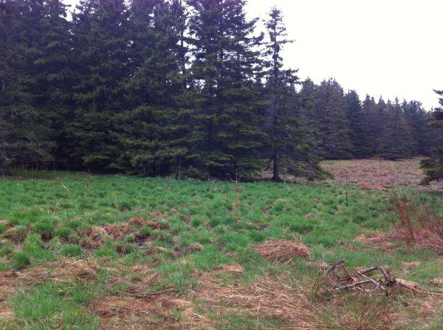 woodswalk3