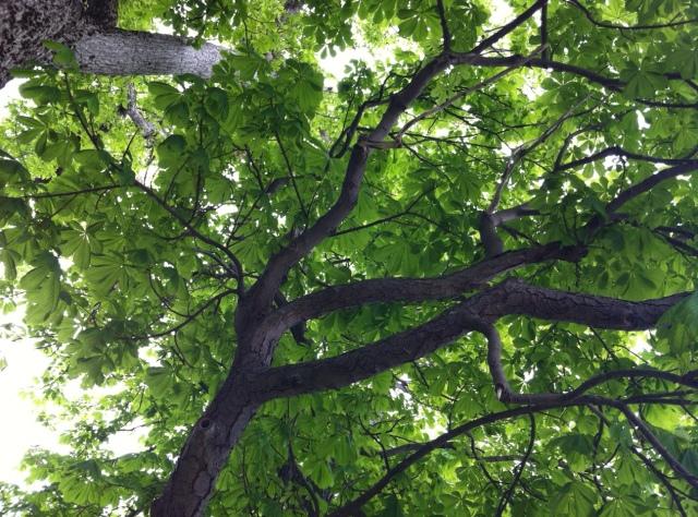 treefromunderneath