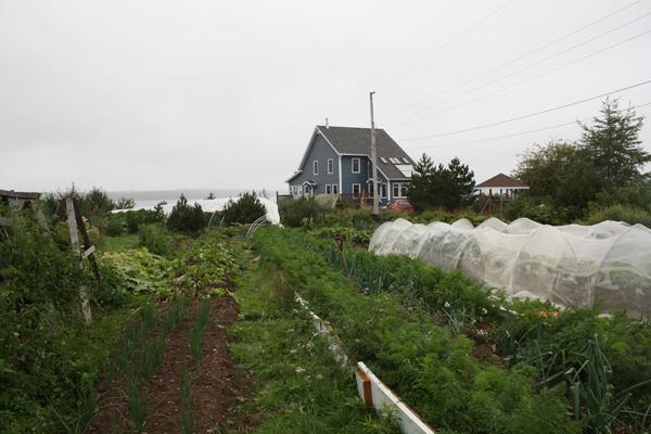 blueheronfarm1