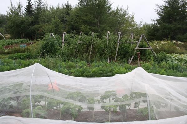 blueheronfarm16